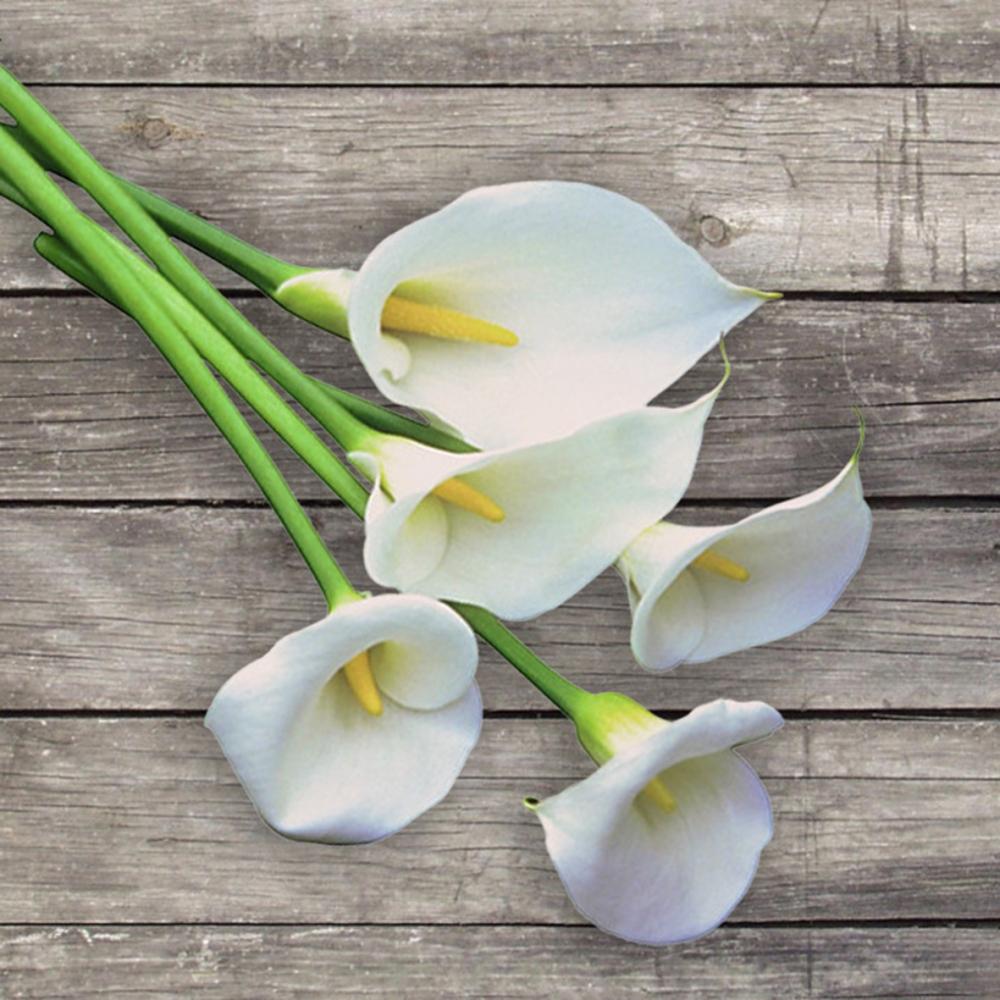 Каллы – почему их именуют цветами смерти